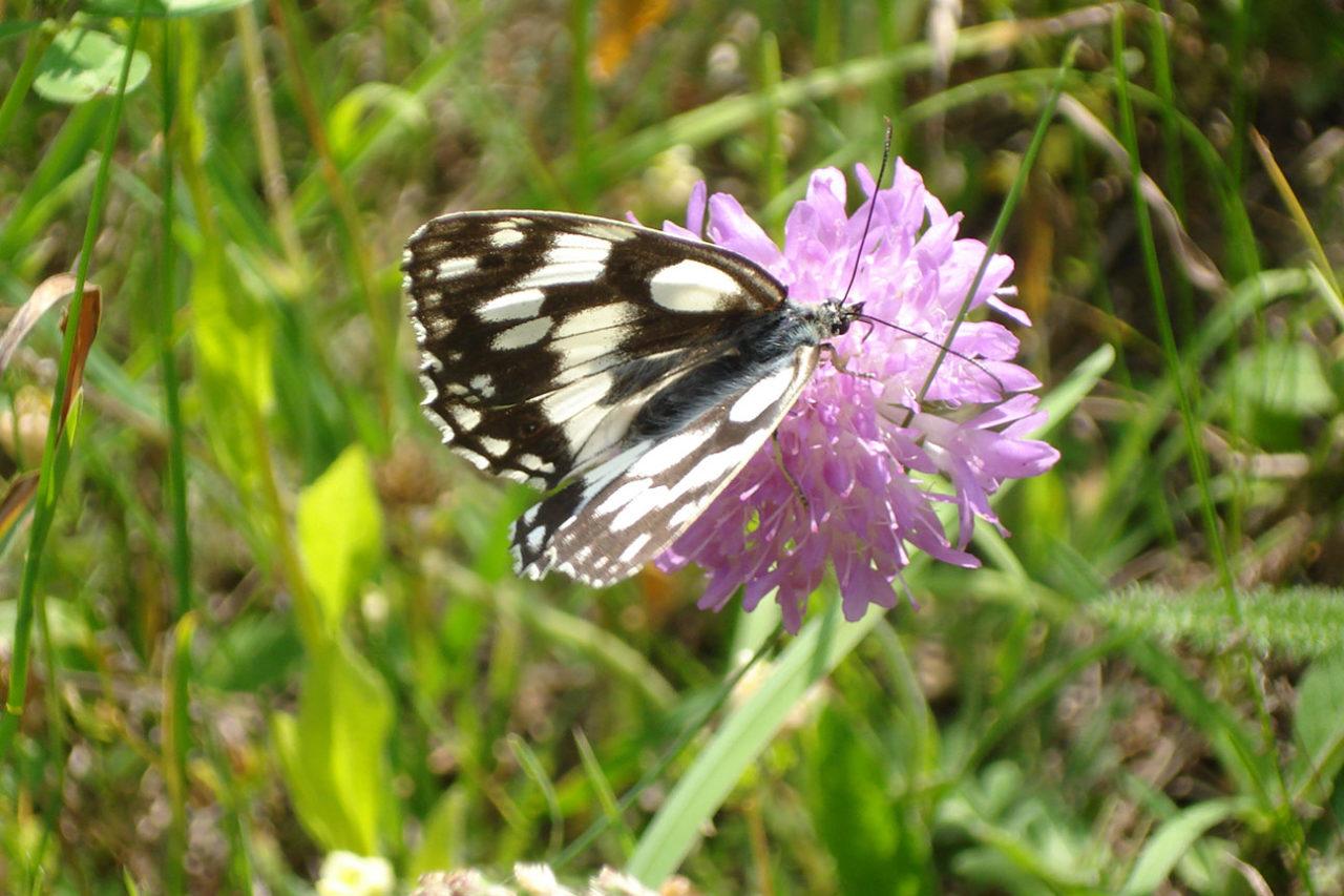 fiore-farfalla